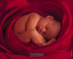 00364945-photo-wallpaper-anne-geddes-copie.jpg